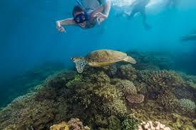 Great Barrier Reef Frankland Islands Tour