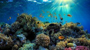 撒克逊礁 (Saxon Reef)