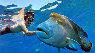 诺曼礁 (Norman Reef)