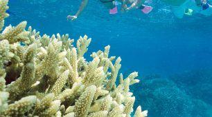 弗林礁 (Flynn Reef)