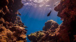 黑斯廷斯礁 (Hastings Reef)